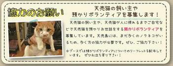 天売4.JPG