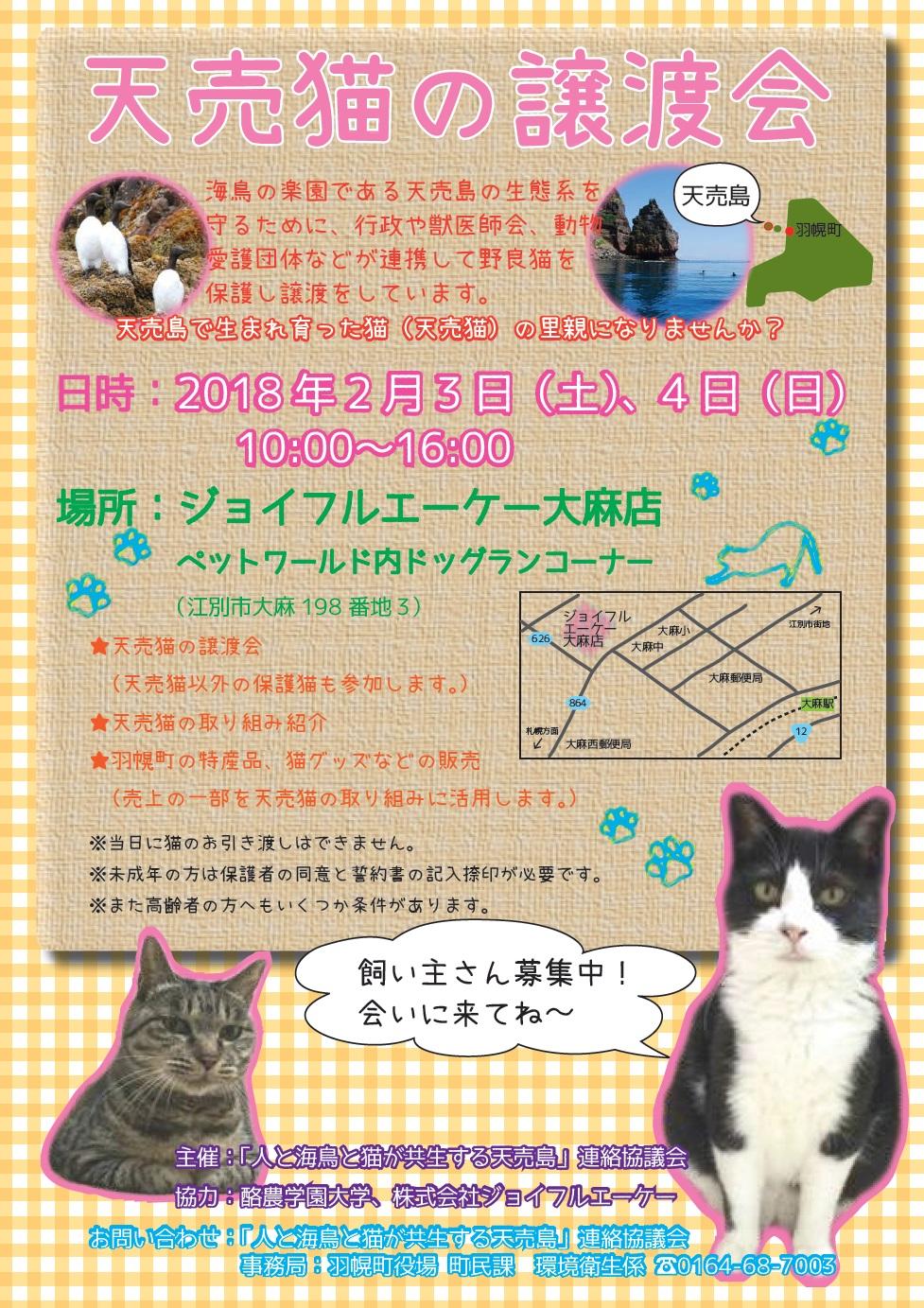 天売猫譲渡会.jpg