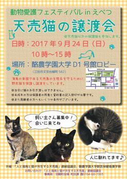 170924天売猫譲渡会_動物愛護フェスinえべつ.jpg